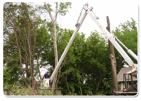 Olson Tree Services